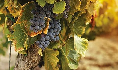 Pessagno Winery End of Harvest Celebration  Winter Club Pick Up Party Image