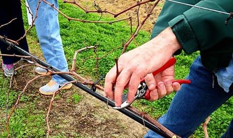 Pruning Workshop Image