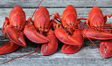 The Maine Event - Lobster Feed Image