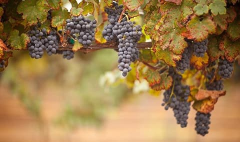 Pessagno Winery End of Harvest Celebration  & Winter Club Pick Up Party