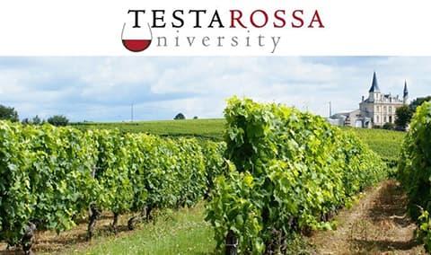 Doctor's Vineyard Pinot Noir Horizontal Clonal Tasting- 7/29/2018