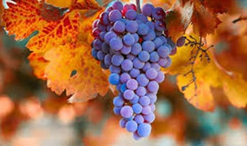 Pessagno Winery End of Harvest Celebration - TICKETS AT THE DOOR