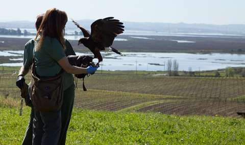 Mothers Day Falconry in the Vineyard Image