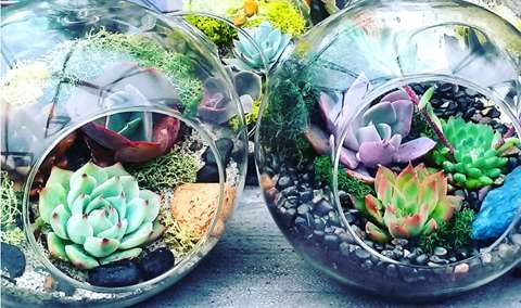 Succulent Terrarium Workshop at Landmark Vineyards