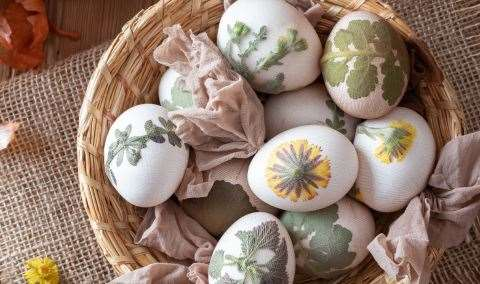 Harvest Hands Series Dyeing Easter Eggs Naturally Image