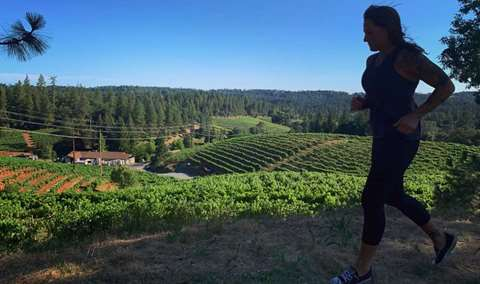 Vineyard Bootcamp Image