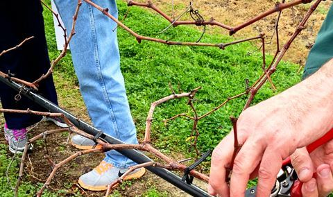 Pruning Workshop Image