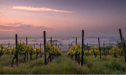 Comedian Maureen Langan Image