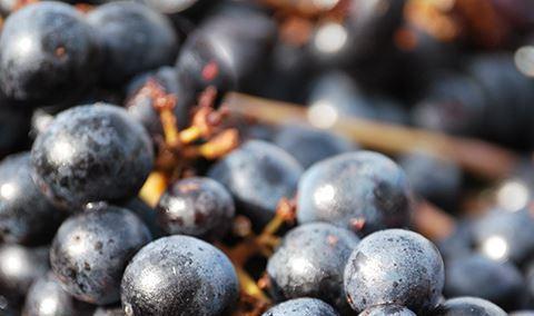 November Wine Dinner Image