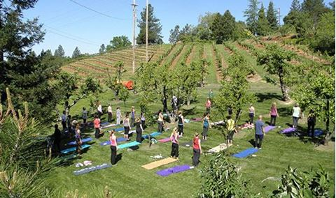 WOGA! Wine & Yoga in the Orchard
