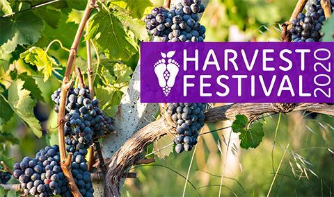 Hill Country Harvest Festival: Daytime Harvest