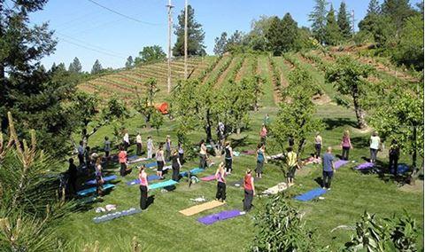 WOGA! Wine & Yoga in the Orchard