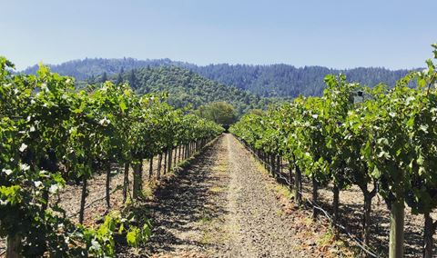 Vineyard Walk & Tasting with Our Winemaker Img