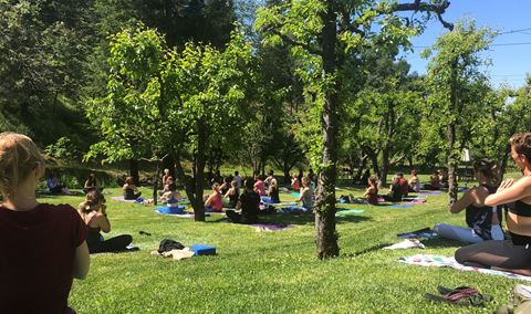 WOGA! WINE & YOGA IN THE ORCHARD Img