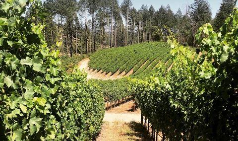 Vineyard Walk & Tasting with Our Winemaker