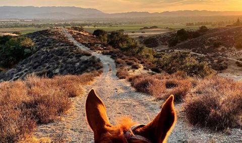 Wine, Dine & Horseback Ride Img