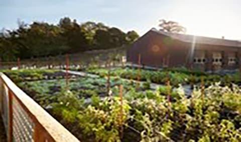 Culinary Garden Harvest Adventure