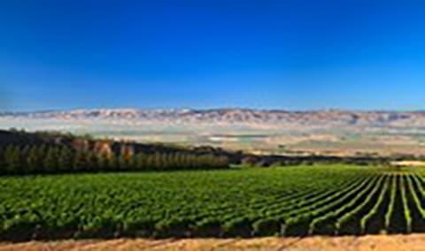 Hahn Family Wines Harvest Celebration Img