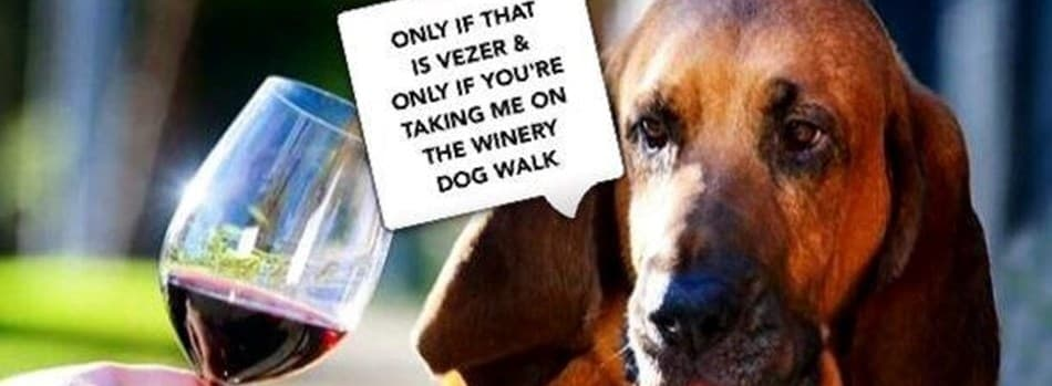 Purchase Tickets to Quarterly Dog Walk at Vezer Family Vineyard on CellarPass