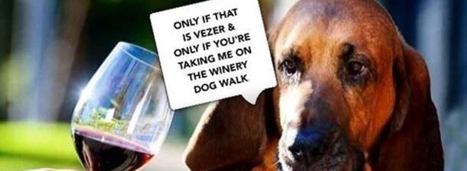 Purchase Tickets to Quarterly Dog Walk - New Location @ Blue Victorian at Vezer Family Vineyard on CellarPass