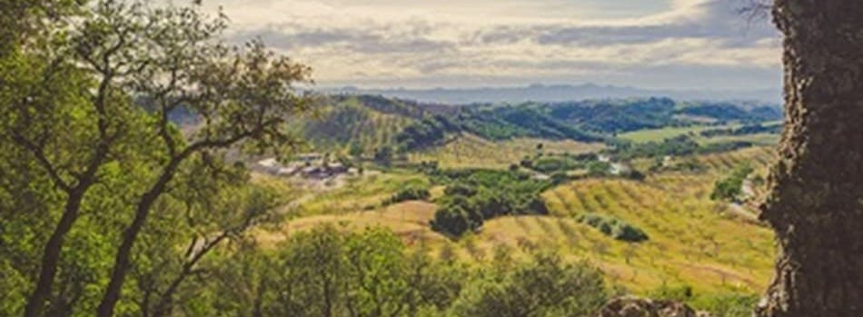 Purchase Tickets to Spring Hilltop Party at Adelaida Vineyards & Winery on CellarPass
