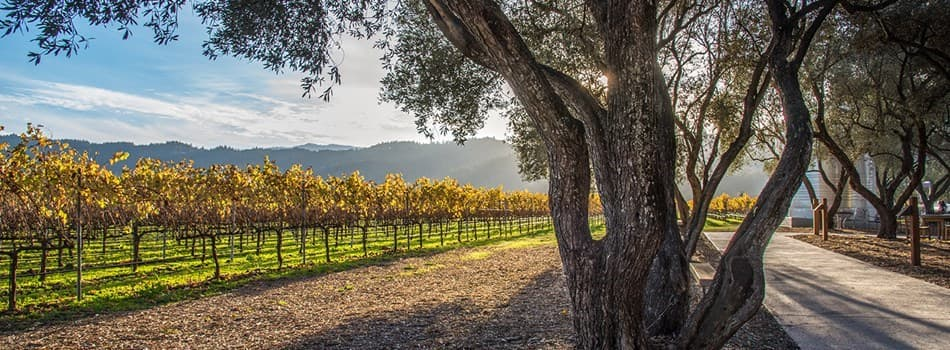 Purchase Tickets to Autumn Fête at Robert Mondavi Winery on CellarPass