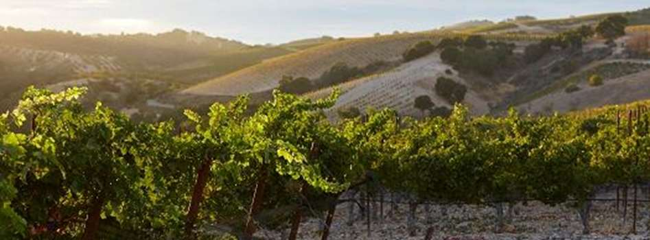 Purchase Tickets to Spring Winemaker Dinner at Adelaida Vineyards & Winery on CellarPass