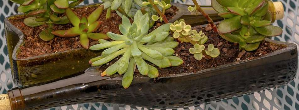 Purchase Tickets to Wine & Design: Succulent Planter at Bluemont Vineyard on CellarPass