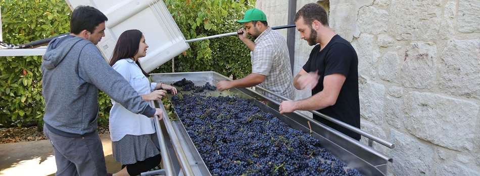 Purchase Tickets to Crush Brunch Member Exclusive Event at Buena Vista Winery on CellarPass