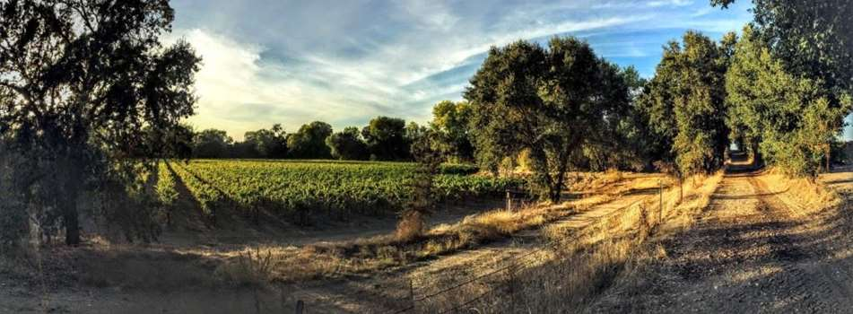Purchase Tickets to June Bird Walk at Heritage Oak Winery on CellarPass