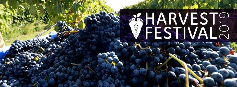 Purchase Tickets to Harvest Festival: Daytime Harvest at Messina Hof Estate Winery and Resort on CellarPass