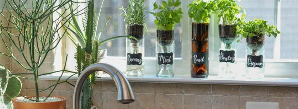 Purchase Tickets to Wine & Design: Self Watering Herb Planter at Bluemont Vineyard on CellarPass