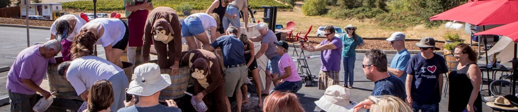 Purchase Tickets to Annual Grape Stomp & 3rd Quarter Wine Club Pick-up at Scott Harvey Wines on CellarPass