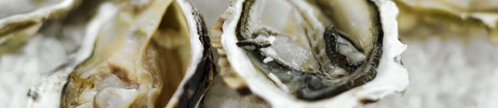Oyster Palooza with Drakes Bay Oyster Company