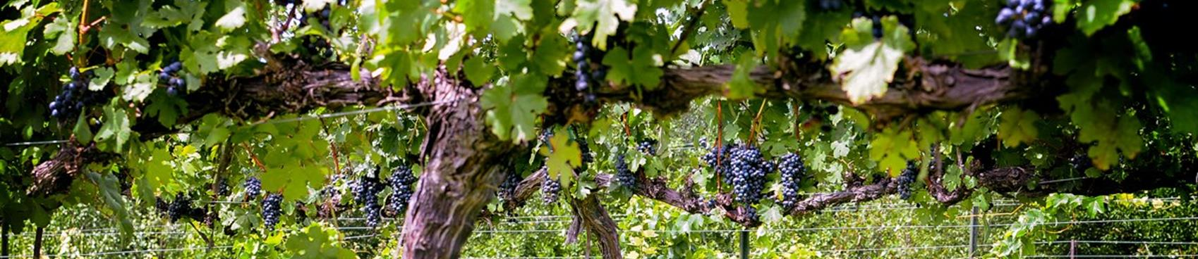 Signature Experience - Tour with the Winemaker