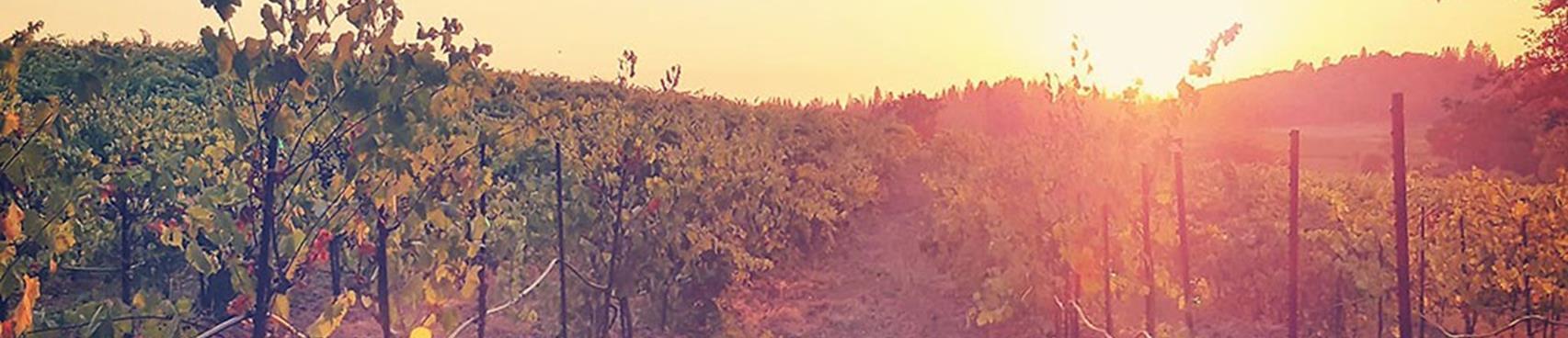 Dobra Zemlja Winery's 2020 Annual Wine Club Member BBQ