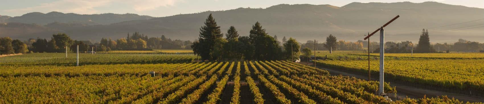 Wine Society Club Virtual Tasting: May Wines